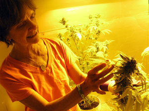 Ellen Lenox Smith Teaches How To Be a Medical Marijuana Caregiver In Your State.