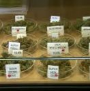 How To Choose The Correct Medical Marijuana Strain