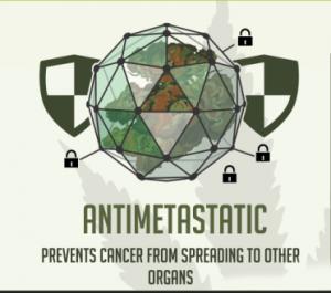 Antimetastatic Prototype