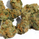 pure kush dispensarylocation.com